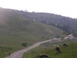vanzare teren extravilan Glodeni